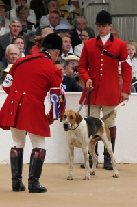 <h5>The Royal Peterborough Foxhound Show – in the ribbons</h5>